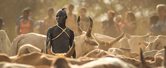 bullah (solinskitomasz) Tags: africa travel man bull tribes ritual tradition ethiopia valey omo