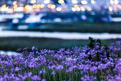 La fleur de Rabat - Maroc (Bouhsina Photography) Tags: flower marina canon wow bokeh morocco maroc couleur rabat 2016 brillant bouregreg bouhsina ef7020028ii 5diii bouhsinaphotography