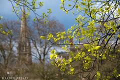 Newness of Life (James Neeley) Tags: london spring hydepark jamesneeley