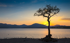 Millarochy Bay (BillBarclayl) Tags: mountains tree water scotland dusk lochlomond
