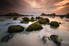 Seaweeds on the Rocks (Tony N.) Tags: france bretagne britanny seaweeds algues rocks rochers marebasse sunset coucherdesoleil assemblagend64nd8 nd400 presqulesaintlaurent saintlaurent finistre porspoder poselongue longexposure d810 nikkor1635f4 vanguard tonyn tonynunkovics mer sea eau water extrieur