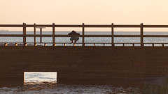 All Alone (Hkan Dahlstrm) Tags: bridge sea people beach photography se skne sweden cropped skanr 2016 f32 skneln ef200mmf28lusm canoneos5dmarkii 1800sek skanrmedfalsterbo 22104062016205710