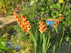 IMG_9629 (wilhelm.haardt) Tags: antjes blumen peniscola frheidi antjesblumenpracht