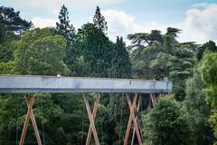 Treetop Walk (Keith (M)) Tags: leica trees woodland arboretum westonbirt 90mm treetopwalk m240 elmaritm elevatedwalk