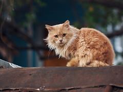 Street cat 158 (Yalitas) Tags: pet cats cat canon kat feline chat kitty gato felino katze katzen kot kedi kass gatta streetcat kotka  kocka  katte  katzchen kottur