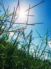 Eternal Summer (Hunh Anh Kit) Tags: apple iphone 6s f22 kietbull eternal sunshine summer