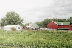 Life on the Farm (Denise @ New Mercies I See) Tags: 2016 august summer farm countryside barn amish amishcountry garden ohio holmescounty winesburg onethousandgifts