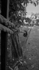 _1020252 (Akiha.) Tags: street blackandwhite old classic