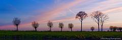 Being alone (Johan Konz) Tags: light sunset rural road trees blue orange sky outdoor landscape field serene atmosphere nikon d90 cloud dusk purmerland waterland netherlands