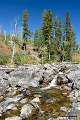 String Creek (kevin-palmer) Tags: september autumn fall nikond750 tamron2470mmf28 grandtetonnationalpark grandteton nationalpark jackson wyoming sunny blue sky circularpolarizer stream creek flowing water