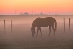 Misty morning (Infomastern) Tags: sdersltt animal countryside dawn dimma djur fog gryning horse hst landsbygd landscape landskap mist soluppgng sunrise exif:model=canoneos760d geocountry camera:make=canon exif:focallength=130mm camera:model=canoneos760d geostate geocity geolocation exif:lens=efs18200mmf3556is exif:isospeed=6400 exif:aperture=56 exif:make=canon