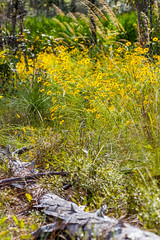 Yellow Flowers (hetrickwesley) Tags: florida gainesville morningside nature outdoors park center flowers butterfly unitedstates us yellow canon 80d tamron 70300 di vc