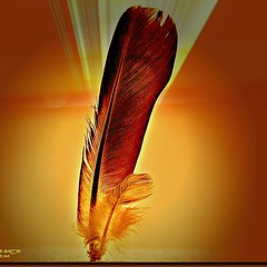 ريشة طير. .  Ą BIRD FEATHER (jawadn_99) Tags: art square three mix dragon photos fine feather squareformat sensational fav awards dagger legacy soe joint goldenheart blueribbonwinner otw flickrsbest bej abigfave platinumphoto anawesomeshot impressedbeauty flickraward infinestyle flickrdiamond diamondclassphotographe 130faves theunforgettablepictures overtheexcellence macromarvels goldstaraward rubyphotographer 130favorites goldenheartaward alwaysexc piexcellance novavitanewlife iphoneography atomicaward legacyexcellence trolledproud instagramapp uploaded:by=instagram
