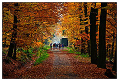 D700-0459-1600 (ac | photo) Tags: autumn trees light people fall nature colors leaves landscape fallcolors