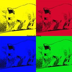 Cat Colors (emanuellelena) Tags: brazil colors brasil cat photoshop cores gata manaus amazonas stampfilter