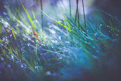 Dream (thethomsn) Tags: blue light green art nature grass canon germany bayern 50mm colorful bokeh natur wiese dreamy waterdrops magical dreamscape wassertropfen eos600d