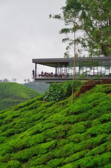 Tea room with a view (Sundornvic) Tags: mountains green leaves highlands workers tea drink malaysia plantation bohtea