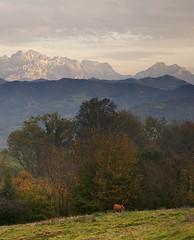 quiet dinner (elosoenpersona) Tags: autumn cow asturias otoño vaca pastando elosoenpersona viyao