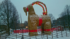 First Snow (crusaderstgeorge) Tags: sweden goat gävle goats firstsnow merrychristmas wintersday bocken 2014
