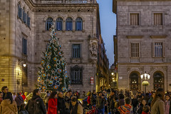 Plaza Sant Jaume Christmas Tree (Glenn Shoemake) Tags: barcelona christmas canonef1635f28lii