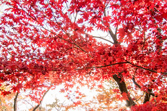 DSC_7935.jpg (d3_plus) Tags: park street autumnfoliage sky nature japan garden scenery outdoor fine sunny 日本 streetphoto yokohama 紅葉 自然 空 横浜 風景 j4 公園 三渓園 sankeien 路上 sankeiengarden ストリート 晴れ ニコン nikon1 屋外 路上写真 1nikkorvr10100mmf456 ニコン1 nikon1j4 ニコンワン