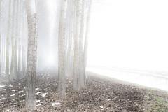 Trees with fog (Stefano Armaroli) Tags: trees italy panorama fog alberi landscape countryside woods italia campagna nebbia scenics bosco sangiovanniinpersiceto starmaro stefanoarmaroli