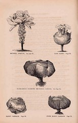 n115_w1150 (BioDivLibrary) Tags: vegetables boston massachusetts seeds brusselsprouts catalogs kohlrabbi mertzlibrarythenewyorkbotanicalgarden seedindustryandtrade stonemasoncabbage bhl:page=46484604 dc:identifier=httpbiodiversitylibraryorgpage46484604 masoncabbage marbleheadmammothdrumheadcabbage curtiscobb curtisdtco bhlgardenstories bhlinbloom