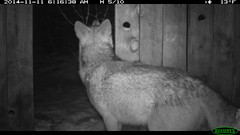 Winter '14 - '15 Trail Camera Footage