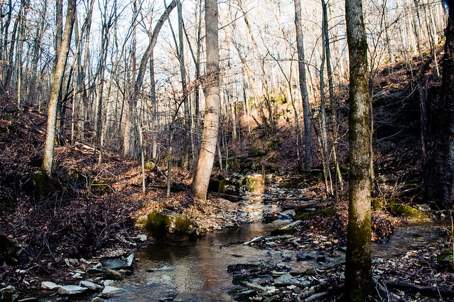 Cedar Bluffs Nature Preserve - December 26, 2014