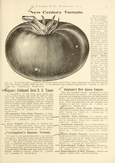 n34_w1150 (BioDivLibrary) Tags: vegetables fruit seeds catalogs gardentools nurserieshorticulture bulbsplants usdepartmentofagriculturenationalagriculturallibrary bhl:page=42156281 dc:identifier=httpbiodiversitylibraryorgpage42156281 bhlgardenstories bhlinbloom