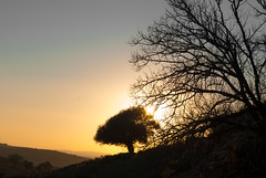 Sunset (BendaHamz) Tags: africa travel autumn sunset two sky orange sun mountain black color tree nature beauty silhouette yellow sunrise landscape evening algeria image horizon nobody algerie   endoftheday        contrjour relizane