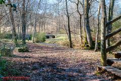 Warner Parks Walkabout - January 17, 2014 (mikerhicks) Tags: winter usa geotagged unitedstates nashville hiking tennessee percywarnerpark warnerparks vaughnsgap canon7dmkii sigma18250mmf3563dcmacrooshsm geo:lat=3606073667 geo:lon=8690321833