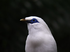 100_2587 (samuel_wkip) Tags: hongkong kodak admiralty hongkongpark hongkongparkaviary kodakz990 z990 hongkongpark香港公園 hongkongparkaviary香港公園觀鳥園