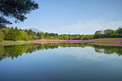 Lake Kawaguchi - Fuji Shiba-sakura Festival (4) () Tags: mountfuji lakekawaguchi  kawaguchiko   fujifivelakes sony a7r japan  yamanashiprefecture landscape  fujishibasakurafestival