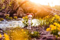 My Astor Spring♥