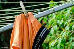 Yes, Well ... (BGDL) Tags: garden togetherness pants underwear jockey clothespeg washingline niftyfifty saturdaytheme nikond7000 bgdl afsnikkor50mm118g flickrlounge lightroomcc