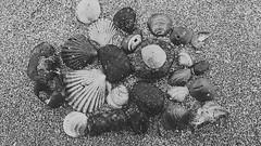 Black and Grey (photographyvisor) Tags: blackandwhite naturaleza beach negro playa arena blncoynegro cracoles