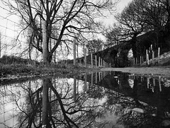 New Mills Reflections (Piers Jacobs) Tags: bw tree water monochrome reflections landscape mono olympus omd em1