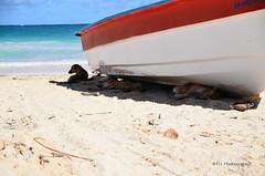 A l'ombre 1 (H..L) Tags: voyage nikon ombre puntacana carabes rpubliquedominicaine laaltagracia livolsi d7000