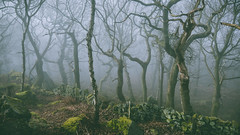 Closed border (J C Mills Photography) Tags: wood morning trees light england mist fog stone wall woodland moss spring oak rocks derbyshire peakdistrict dry boulders birch sessileoak canon5dsr