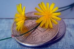 Two flowers _ Macro Monday (kevin_art) Tags: macro macromondays macromonday smallerthanacoin