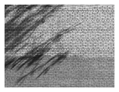 (Gene Daly) Tags: newyorkcity blackwhite yashinon genedaly olympusem5 p5280122 yashicaautoyashinonds50mmf19