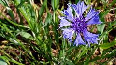out for a walk - 1 (photos4dreams) Tags: flower macro forest walk feld wiese blume makro wald secretgarden spaziergang photos4dreams photos4dreamz p4d