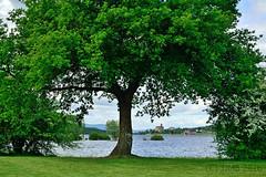 Paisaje ((C)JJMB) Tags: trees paisajes lake verde green lago landscapes rboles lac paisaje rbol alava paisaia berdea aintzira