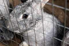() Tags: pet pets rabbit nature animal zoo cell captivity