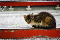 Today's Cat@2016-06-14 (masatsu) Tags: cat pentax catspotting mx1 thebiggestgroupwithonlycats