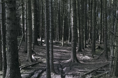 (Demanded By The Landscape) Tags: landscape forest fineartphotography przemyslawstroinskiallrightsreserved photography sigma