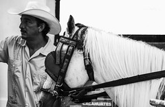 Street Cowboy (F051) Tags: street people blackandwhite bw horse man streets photography stolenmomment