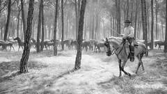 en la saca de yeguas de Almonte - Huelva. (mabarror) Tags: caballos huelva caminos almonte yeguas potros sacadeyeguas mabarror manuelbarragnrodrguez