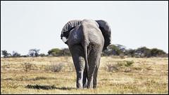 _SG_2016_05_Namibia_0085_IMG_1314 (_SG_) Tags: auto africa park trip elephant tree water car nationalpark wasser solitude desert hole national afrika giraffe ausflug elefant namibia herd baum strauch etosha watering wateringhole elefanten 2016 einde giraffen etoshanationalpark standpost wasserstelle etoshapark elefantenherde giraffenherde giraffesherd